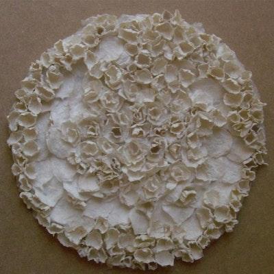 White Lichen 1